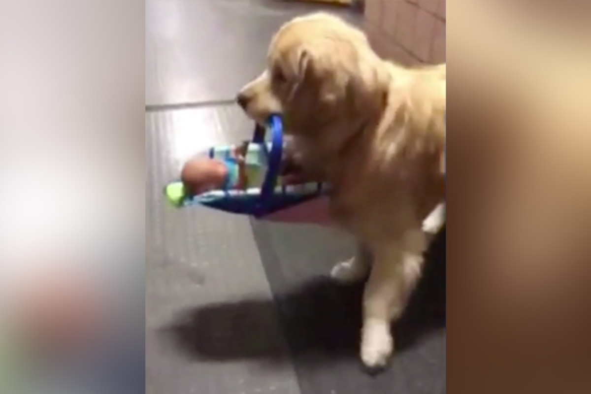 Police dog caught stealing toy donated for children